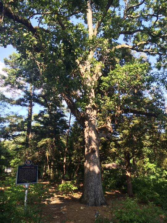 Founders' Oak